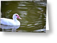 Beak And Feather Reflections Of The Muscovy  Greeting Card