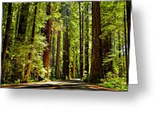 Beam Of Light In The Trees Greeting Card