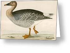 Bean Goose Greeting Card