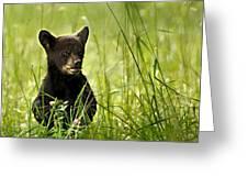 Bear Cub In Clover Greeting Card