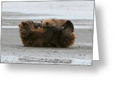 Bear Cubs Nurse Greeting Card