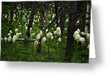Bear Grass Greeting Card