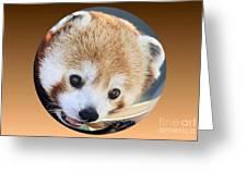 Bear In A Ball Greeting Card