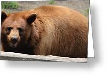 Bear In The Bath Greeting Card