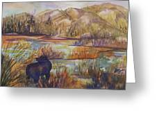 Bear In The Slough Greeting Card
