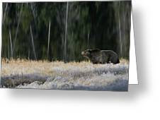 Bear Lake Greeting Card