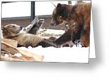 Bear Play Greeting Card