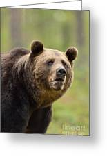 Bear Portrait Greeting Card
