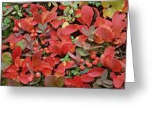 Bearberry In Autumn Yukon Canada Greeting Card