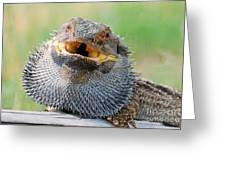 Bearded Dragon In Defense Mode Greeting Card by Christopher Edmunds
