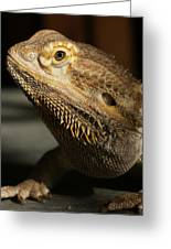 Bearded Dragon Profile Greeting Card