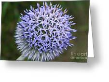 Bearded Flower Greeting Card
