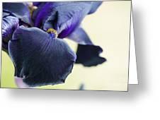 Bearded Iris Interpol Greeting Card