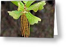 Bearded Oak Greeting Card