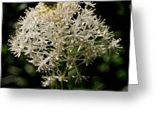 Beargrass Bloom Greeting Card