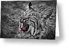 Bearizona Bobcat Greeting Card by Priscilla Burgers