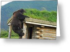 Bearly Able Greeting Card