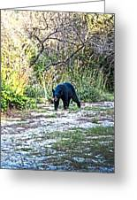 Bearly Stroll Greeting Card
