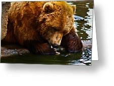 Bearly Wet Greeting Card