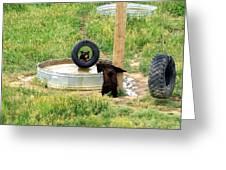 Bears At Play Greeting Card