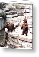 Bears Feeding Time At The Zoo II Greeting Card