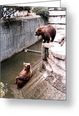Bears Feeding Time At The Zoo Greeting Card