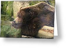 Bears In Ohio. No.23 Greeting Card