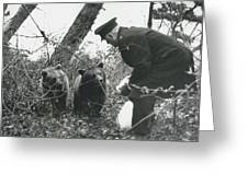 Bears Still At Large On The Isle Of Wight Greeting Card