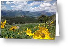 Beartooth Blooms Greeting Card