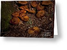 Beartooth Mountain Mushrooms   #3661 Greeting Card