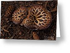 Beartooth Mountain Mushrooms   #9142 Greeting Card