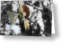 Beatiful Flower Greeting Card