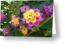 Beaucoup Of Blooms Greeting Card
