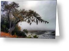 Beaufort Back Water Greeting Card