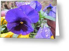 Beauties In The Rain Greeting Card