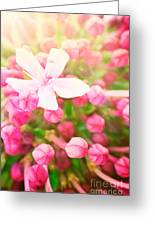 Beautiful Abstract Floral Background Greeting Card