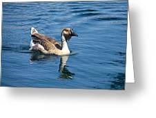 Beautiful African Brown Goose Greeting Card