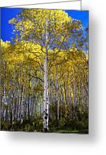 Beautiful Aspen Tree Greeting Card