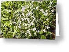 Beautiful Azure Bluets Appalachian Trail Greeting Card