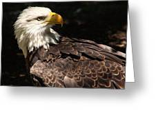 Beautiful Bald Eagle Greeting Card