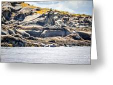Seals And Rock Scupltures Greeting Card