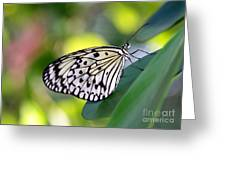 Beautiful Black N White Rice Paper Butterfly Greeting Card