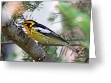 Beautiful Blackburnian Warbler Greeting Card