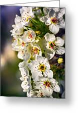 Beautiful Blossoms Greeting Card