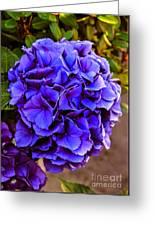 Beautiful Blue Hydrangea Greeting Card
