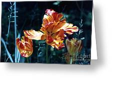 Gorgeous Tulip Greeting Card