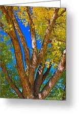 Beautiful Blue Sky Autumn Day Greeting Card