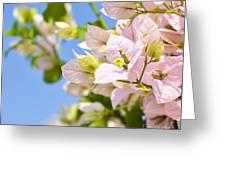 Beautiful Bougainvillea Flowers Against Blue Sky Greeting Card