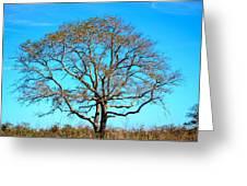 Beautiful Branching Greeting Card