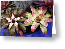 Beautiful Bromeliads Greeting Card